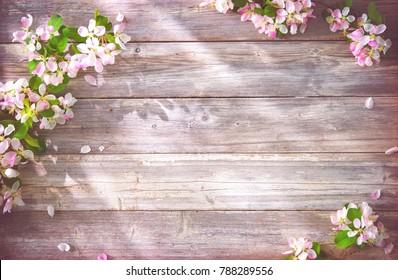 Frühlingsblühende Äste auf Holzhintergrund. Apfelblüten