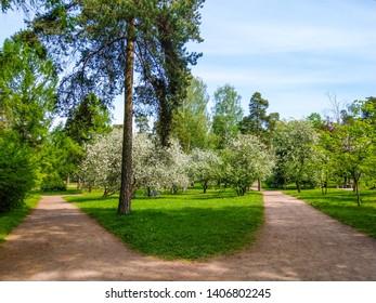 Spring blooming city apple park landscape. Spring blooming apple tree blossom. Spring blooming park alley. Spring blooming apple park path view