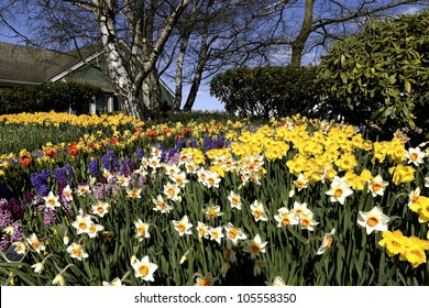 Spring blooming flowers of various kinds on a nice sunny day