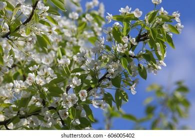 Spring blooming garden.