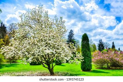 Spring blooming garden nature landscape. Spring blossom tree in spring blooming garden. Spring bloom nature landscape