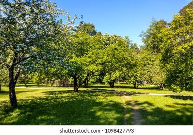 Spring blooming park garden landscape in spring Saint-Petersburg, Russia