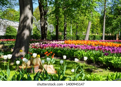 Spring blooming park tulip flowers view. Tulips in spring blooming garden. Tulip festival in spring Saint Petersburg, Russia. Tulips in spring blooming garden