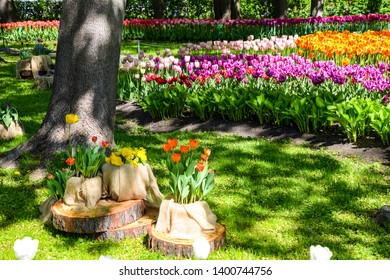Spring blooming park tulip meadow view. Tulip festival in Saint Petersburg, Russia at May spring. Spring blooming tulip flowers. Spring blooming tulip garden scene