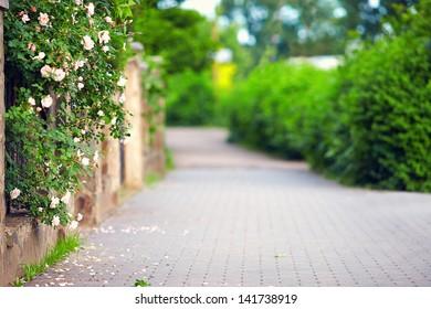 spring blooming sidewalk