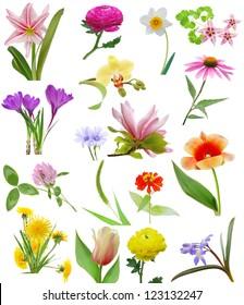 Spring blooms in America