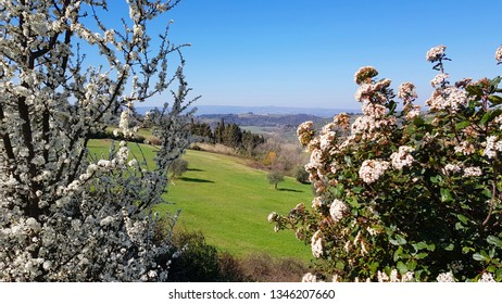 Spring blooms. Tuscan countryside in the Chianti hills south of Florence and spring blooms in the foreground, Tuscany, Italy