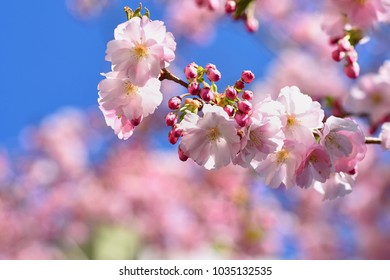 Spring blossom background. Beautiful nature scene with blooming tree and sun. Sunny day. Spring flowers. Abstract blurred background in Springtime.