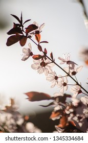 Spring blossom background. Beautiful nature scene with blooming tree and sun flare. Sunny day. Spring flowers. Abstract blurred background. Springtime.