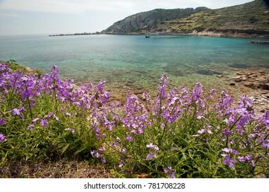 Spring blossom in Knidos ancient harbor Datca Turkey