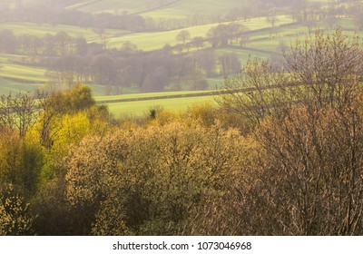 Spring blossom and leaf growth on trees on the Herefordshire Downs in England