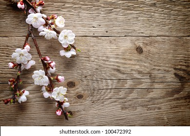 Spring blossom on wood background