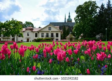 Spring blossom: tulips in the Prague Castle, Czech Republic