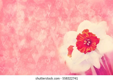 Spring blossoming daffodil, selective focus, shallow DOF, toned, light and heart bokeh background, pastel and soft card