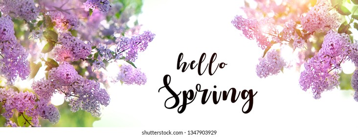 Spring blossoming lilac, banner. Hello spring concept. gentle lilac flowers. Flowers violet lilac in sun glow with beautiful bokeh. Floral romantic image spring nature. soft focus