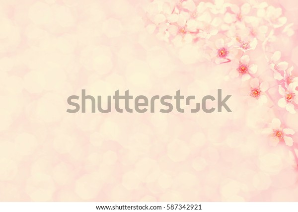 Spring blossoming pink bird cherry/mayday tree, selective focus, shallow DOF, toned, light and heart bokeh background, pastel and soft card