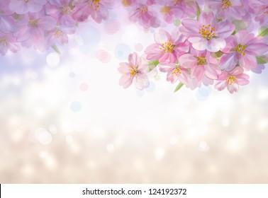 春天开花的树。