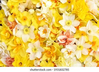 Frühlingsblüten in Gelb-, Weiß- und Aprikosenfarben, Frühlingsblüten (jonquil) Blumen, Bouquet-Hintergrund
