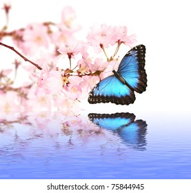 Spring blossoms with butterfly