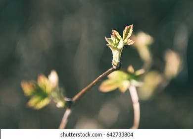 spring blossoms and leaves on blur background in country - vintage matte look