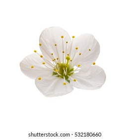 Spring blossoms over white with clipping path.
