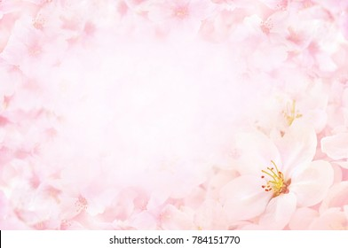 Spring blossom/springtime apple bloom, bokeh cherry flowers background, pastel and soft floral card, toned
