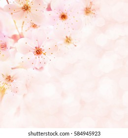 Spring blossom/springtime cherry bloom, toned, bokeh flower background, pastel and soft card