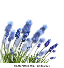 spring blue flowers isolated on white