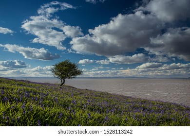 Spring Bluebells with lone tree and bright sky