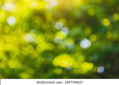 Spring bokeh nature abstract background. Blur green leaves. Lens flare effect. Toned. Selective focus. Copy space.