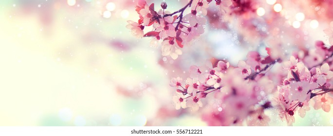 Spring border or background art with pink blossom. Beautiful nature scene with blooming tree and sun flare. Easter Sunny day. Spring flowers. Beautiful Orchard Abstract blurred background. Springtime.