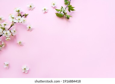 Spring border background with beautiful white flowering branches. Pink background, bloom delicate flowers. Springtime concept. Flat lay top view copy space.