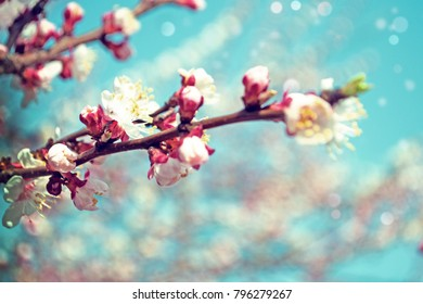 Spring border background with blossom, close-up. Abstract floral spring background.