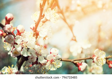 Spring border background with blossom, close-up. Abstract floral spring background. Blossoms over blurred nature background/ Spring flowers/Spring Background with bokeh