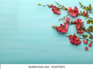 Spring border background with branches of Japanese quince, top view. Springtime concept.