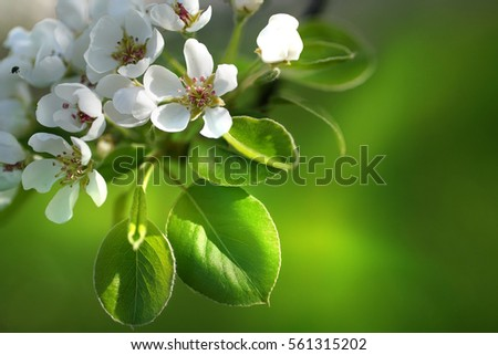 Spring Border Template Wallpaper With A Branch Of Blossoming Apple Tree Close Up Macro