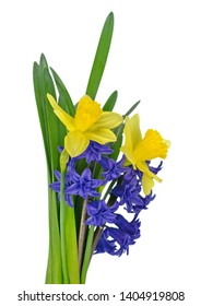 Spring bouquet of flowers isolated on white background. Blue Hyacinth flower bouquet, Hyacinthus orientalis and Yellow daffodil.