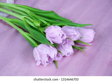 Spring bouquet of light purple tulips on pink background