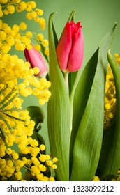 Spring bouquet with tulip and mimosa, close up