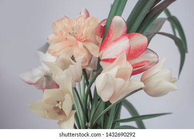 spring bouquet, tulips and lily foliage, yellow and red buds, gray background.