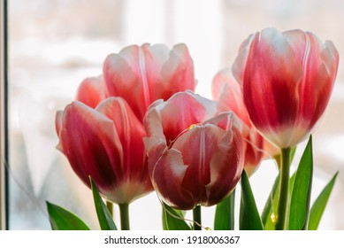 Spring bouquet. Bouquet of tulips on the background of the window. Spring flowers. Macro photo