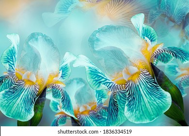 Spring bouquet of turquoise irises flowers on a sunny white-turquoise background. Close-up.Greeting card. Nature. - Shutterstock ID 1836334519