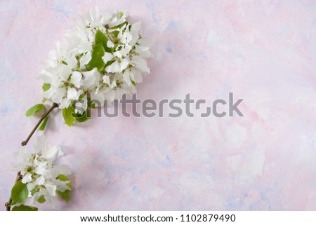 Spring branch of Apple tree is lying on the left on trendy textured white-pink-lilac background.