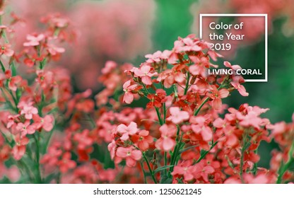 Spring branch of blossoming lilac. turquoise fabric with a nap pleated. Color of the year 2019 Living Coral.