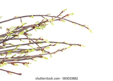 Spring branch isolated on white background. Nature objects