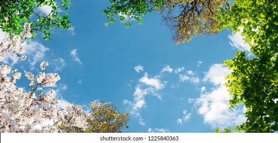 Spring branches in the sky