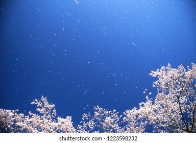 Spring breeze and blue sky