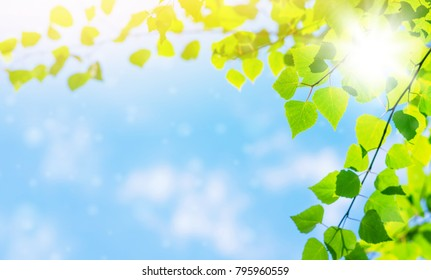 Spring bright background with birch leaves against the sky