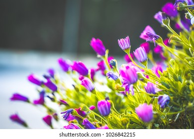 Spring. Bright lilac meadow flowers