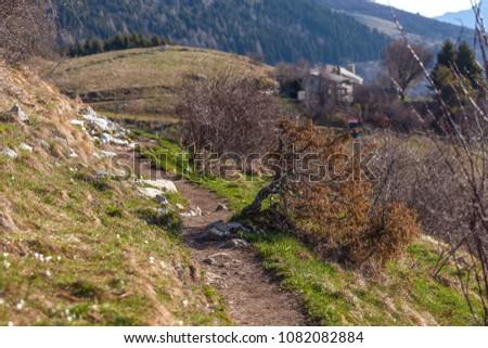 Spring Bushes Along Mountain Path Pian Stock Photo Edit Now